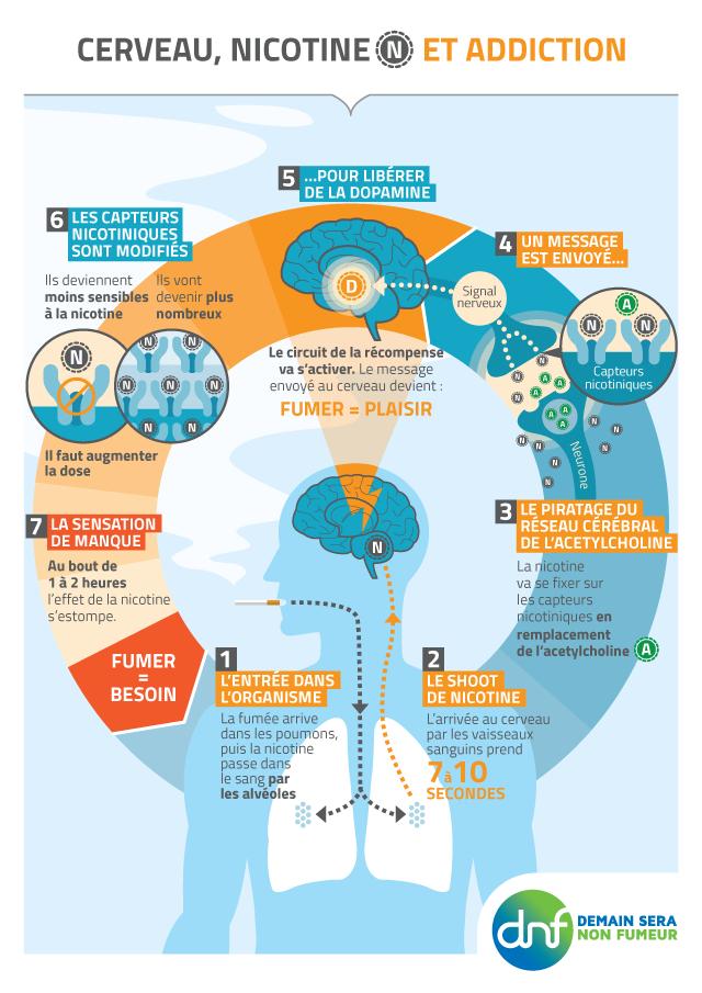 DNF-Cerveau nicotine et addiction
